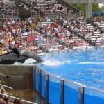 Sea World Orlando - Shamu - 009